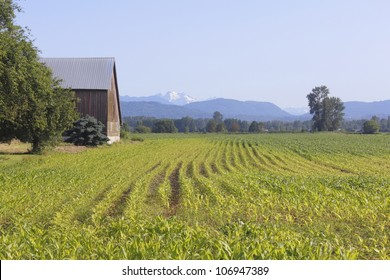 A Canadian homestead on the West Coast/A Canadian homestead/Rural agricultural land on a typical Canadian farm.