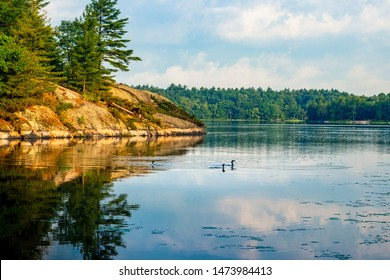 CANADIAN LANDSCAPE WITH LOONS AT SUNRISE - 3 loons/birds swimming by beautiful lake view in Canada, with rocks and forest trees surrounding. Classic Canadiana summer scene. Muskoka, Ontario, Canada