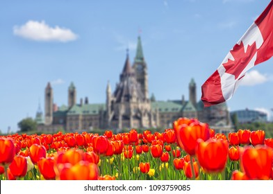 Canadian Parliament Buildings at Ottawa with full bloom red and yellow tulips in front