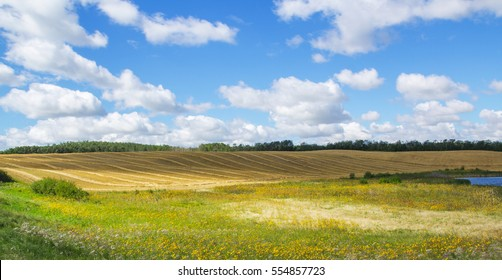 Canadian prairie wheat field swathed for harvest
