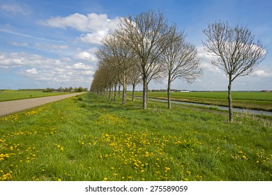 Canal along a countryside road in spring