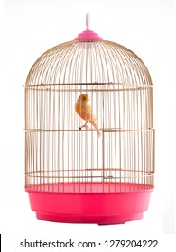 canary in a golden cage isolated on white background