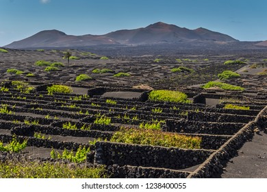 Canary islands lanzarote wine agriculture scene