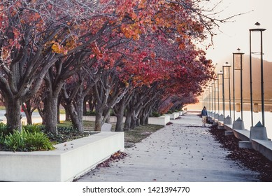 Canberra, ACT/ Australia- 7 June 2019: The trees along the foreshore burn brightly with orange foliage in Autumn, lose their leaves in Winter, gain them back again in Summer & then blossom in spring.