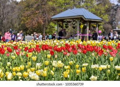 Canberra, ACT, Australia - September 24 2016:  Floriade Canberra 2016,Floriade – Australia's biggest celebration of spring.