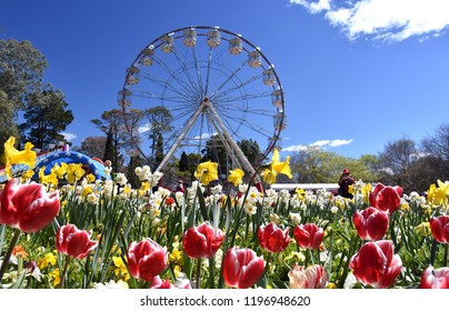 Canberra, Australia - Sept 29, 2018. Ferris wheel at the Spring Festival of Floriade. Masses of tulips in front of the Ferris Wheel at Floriade in Commonwealth Park.