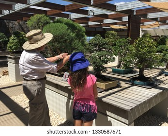 CANBERRA -  MAR 01 2019:Gardener trimming bonsai tree at National Arboretum Canberra Australia.Bonsai is a Japanese art form produce small trees that mimic the shape and scale of full size trees.