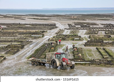 CANCALE, FRANCE - JUNE 27: Growing oysters at low tide at the port of Cancale, France, on June 27, 2013. Cancale is famous for the large difference between high and low tide the ocean.