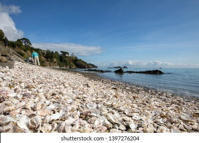 Cancale, France - September 15, 2018: Thousands of empty shells of eaten oysters discarded on sea floor in Cancale, famous for oyster farms.  Brittany, France