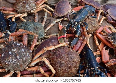 Cancale; France - september 7 2020 : crustacean in fish shop