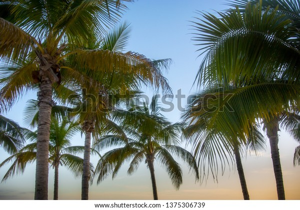 Cancun Palm Trees Sunset Resort Living Stock Photo Edit Now