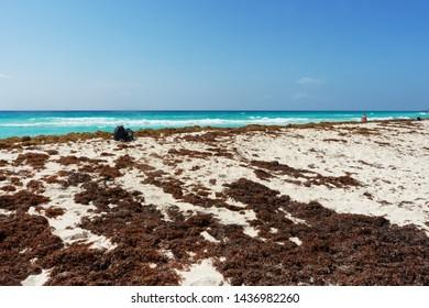 Sargassum Images, Stock Photos & Vectors | Shutterstock