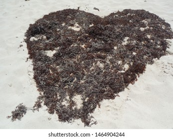Cancun, sargassum heart on the Cancun beaches over the white sand