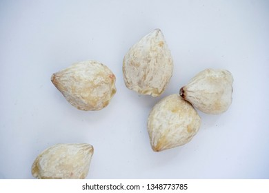 candlenut or kukui or kemiri is a spice usually used in Indonesian cooking, candlenut isolated on white background, Aleurites Moluccana.