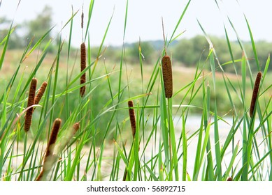 Cane at  small river