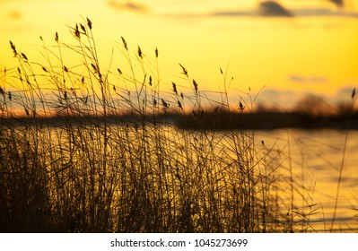 cane watersky, autumn golden sunset on the lake