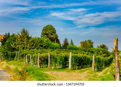 CANELLI, ASTI, PIEMONTE, ITALY - September 12, 2018: Vineyard in the Langhe and Monferrato area, renowned for the production of wine and World Heritage site.