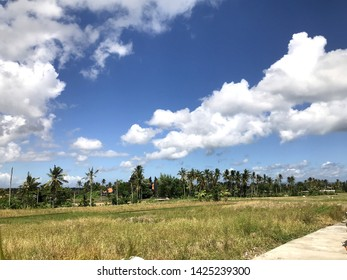 Canggu - Bali, Indonesia - 06 08 2019: Stunning view on the beautiful rice terraces and rice fields in Mengwi, Bali
