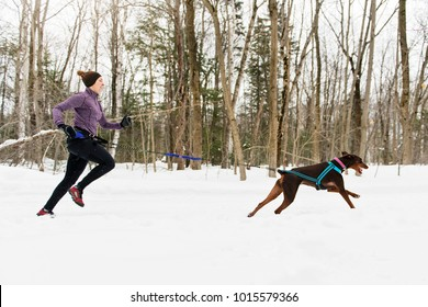 Canicross Sled Dogs Pulling the Young Womanin winter season