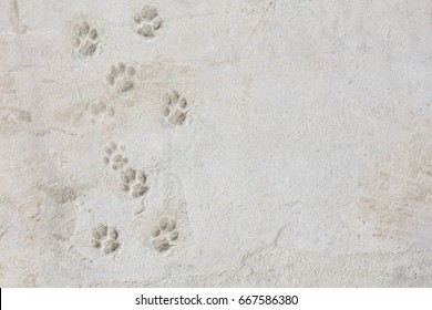 Canine footprints in sand in the beach top view