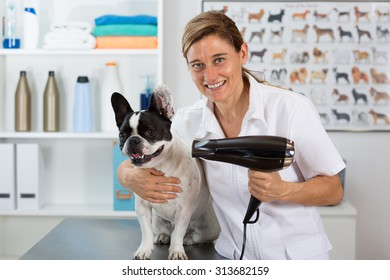 Canine hairdresser in a beauty clinic with French bulldog