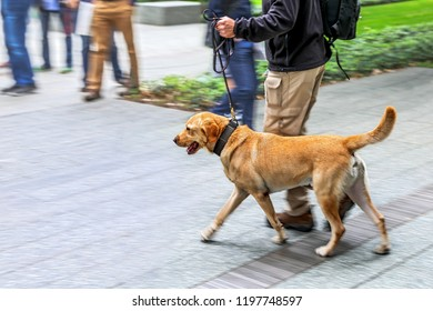 canine service dog on a city street intentional blur