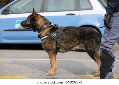 Canine Unit of the police for the detection of explosive material during a counterterrorism operation
