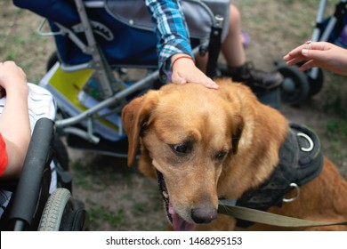 Canis Dog Therapy. Labrador dog and disabled children on green grass. Dog-Assisted Therapies and Activities in Rehabilitation of Children with Cerebral Palsy and Physical and Mental Disabilities.