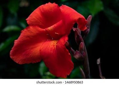Canna flowers are flowers that are yellow or red or other colors.It is also a sacred flower.People who are popular Buddhists are worshiping the monks.