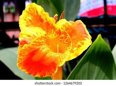 Yellow Flower With Red Center Images Stock Photos Vectors