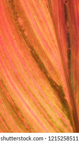 canna leaf that could be used as a background