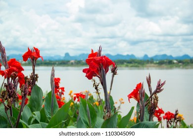 Canna lilly,Canna Lily,Canna Lily and sky,Canna lilly and lake.