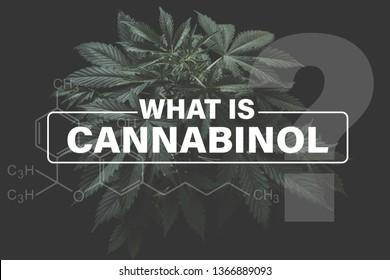 Cannabidiol CBD formula, marijuana vegetation plants hemp cultivation cannabis, Growing cannabis indica, background green, CBD, marijuana leaves,
