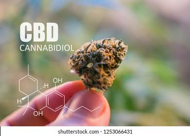 cannabinoids in marijuanaCBD THC elements