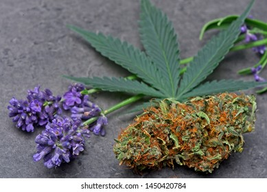 Cannabis bud and leaf with levander depicting linalool terpene.