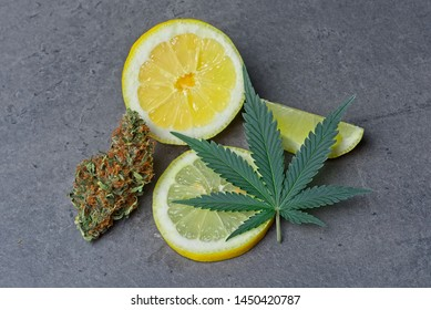 Cannabis bud and leaf with sliced lemon depicting limonene terpene.
