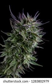 cannabis bud macro
