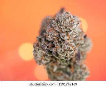 Cannabis Bud on an Orange Festive Bokeh Background