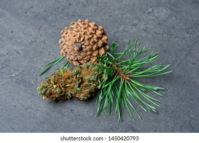 Cannabis bud and pine cone and needles depicting pinene terpene.