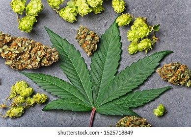 Cannabis buds and leaf with dry hoppy. Humulene terpene concept on grey background. Closely arranged.