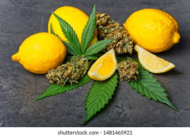 Cannabis buds / nugs and leaves with sliced lemon. Limonene terpene concept on gray background.