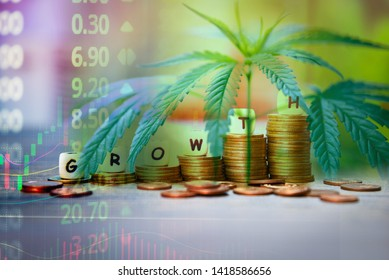 Cannabis Business marijuana leaves and stack of coins stock success market price up profit growth charts graph trading money industry trend grow higher quickly /  Commercial cannabis medicine money