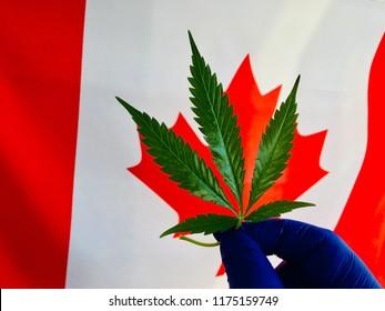 cannabis canada flag