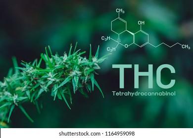 Cannabis, cannabinol, Cannabidiol, Tetrahydrocannabinol (THC)