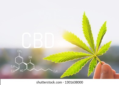 Cannabis CBD oil and structural chemical formula CBD. Medical extract. Cannabis concept