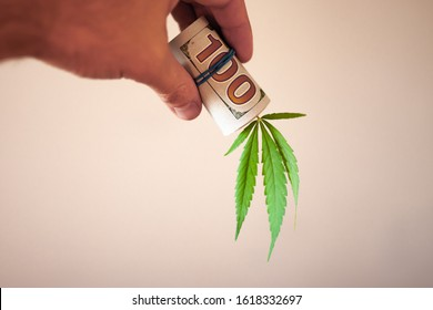 Cannabis finance, money and pot. Revenues in the marijuana industry and the medical industry. American dollar bill on cannabis leaves. The economy of hemp industry. Tax on weed