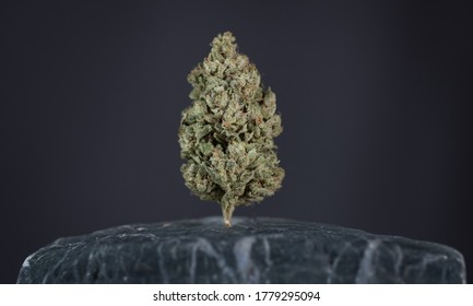 cannabis flower bud close up grey background