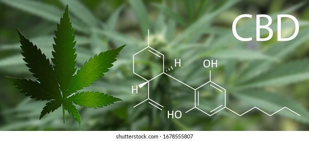cannabis with formula of cbd