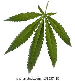 Cannabis is a genus of flowering plants.