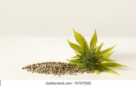 Cannabis green flower scattered raw hemp seeds